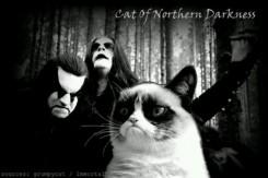 Oletko kissojen sekä black metalin ystävä? Tässä sinulle Twitter -tili jota sinun tulisi seurata
