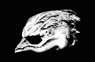 Legend Of The Seagullmenin debyyttialbumi seilaa korkeista odotuksista huolimatta karille