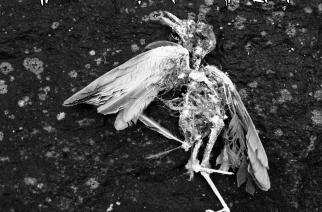 """Gloomy Grimin EP """"Obscure Metamorphosis"""" on onnistunut paketti"""