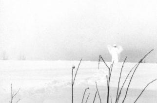 """Vakavan mutta laadukkaan asian äärellä – klassikkoarviossa 20 vuotta täyttävä Timo Rautiaisen & Trio Niskalaukauksen """"Itku pitkästä ilosta"""""""